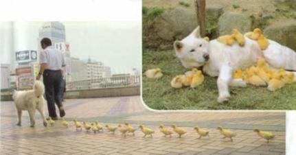 chickmagnet1.jpg