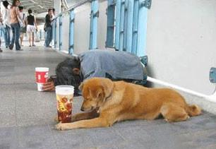 homelessdoggy.jpg